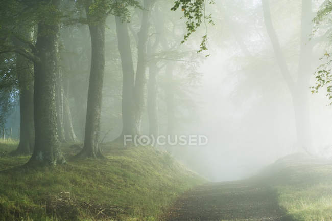 Trail through misty forest with sunlight in fog — Stockfoto