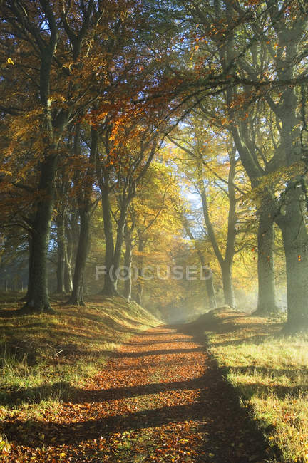 Trail through dense forest in autumn sunlight — Photo de stock