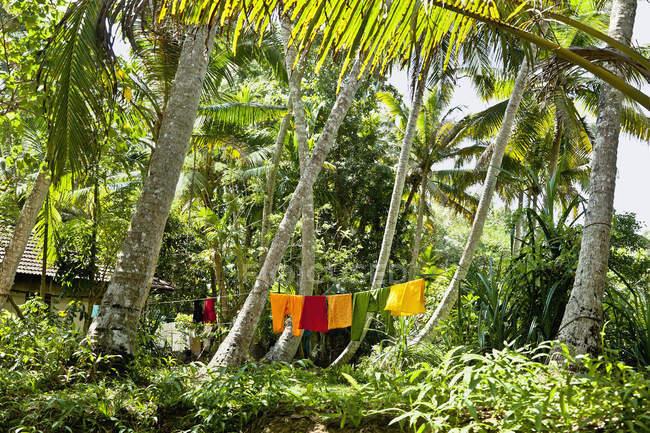 Clothes drying in green lush jungle, Cochin, Kerala, India — Stock Photo