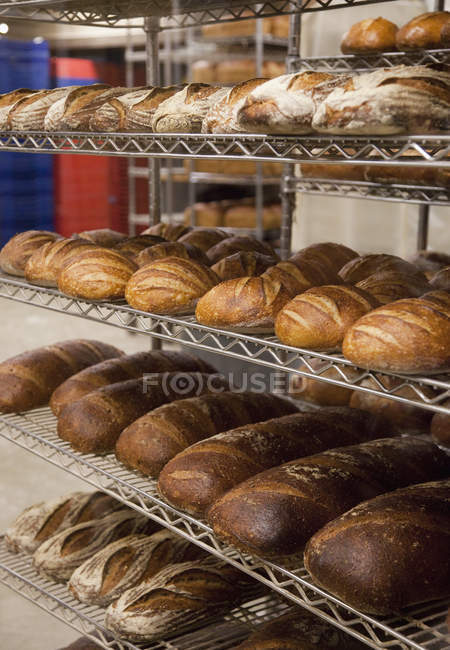 Brotbrote in der Bäckerei, New York City, New York, Usa — Stockfoto