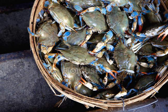 Cesta más gruesa de cangrejos recién capturados, vista superior - foto de stock