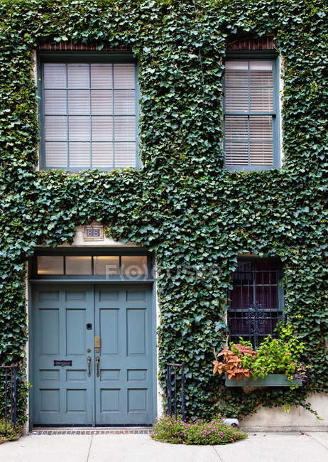 Leaves covering building facade with door and windows, full frame, New York City, New York, USA — Stock Photo