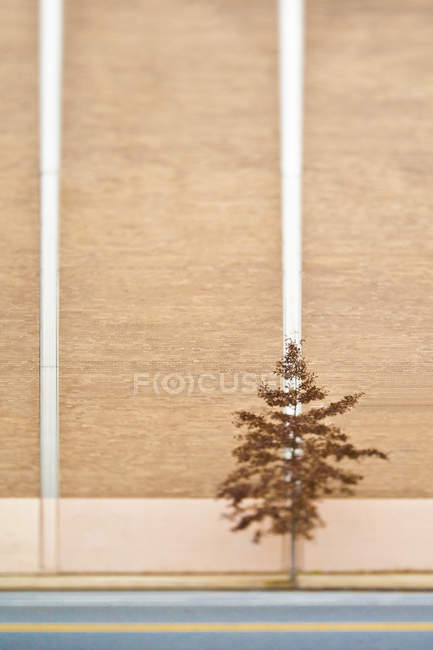 Lone tree next to industrial building in selective focus — Stock Photo