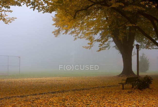 Parc en automne avec feuillage jaune tombé et brouillard — Photo de stock