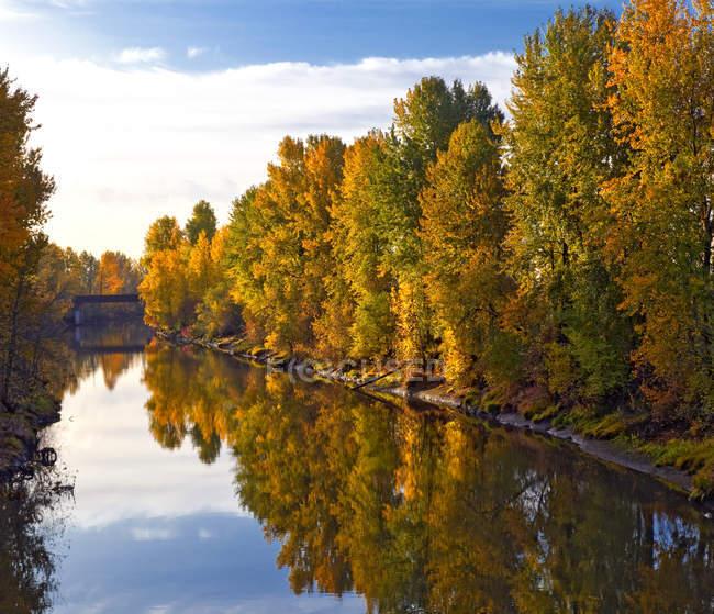 Alberi boschivi autunnali lungo l'acqua del fiume, Portland, Oregon, USA — Foto stock