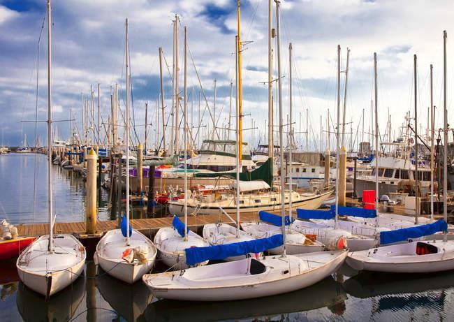 Veleros atracados en marina, Santa Barbara, California, EE.UU. - foto de stock