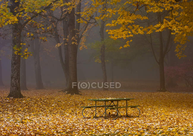 Picnic table and benches in autumnal park with fallen leaves, Portland, Oregon, USA — Stock Photo