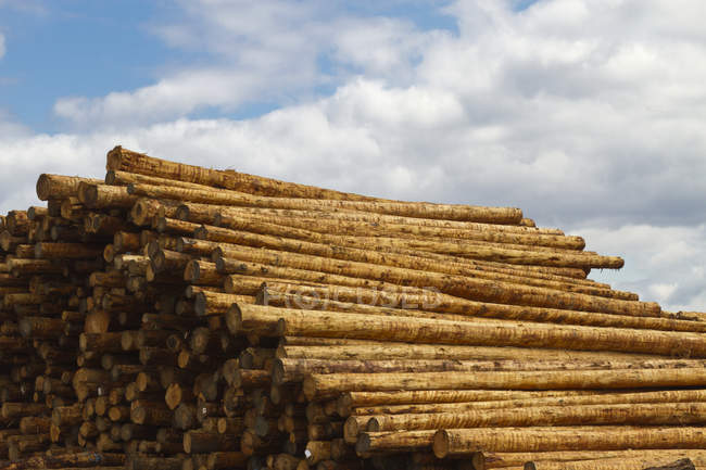 Stacked fresh timber against cloudy sky, Oregon ,USA — Stock Photo