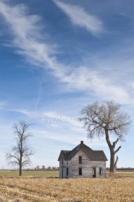Abandoned house in rural field with bare trees — Stock Photo