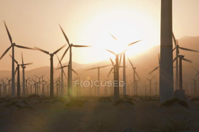 Éoliennes au coucher du soleil dans la vallée de Californie, États-Unis — Photo de stock