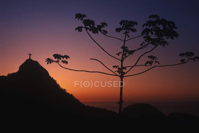 Растение, растущее на закате со статуей Христа Искупителя на горе на расстоянии, Рио-де- — стоковое фото