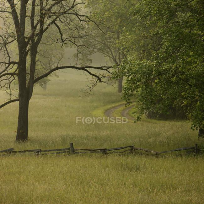 Corsia rurale attraverso il campo del parco nella nebbia mattutina — Foto stock