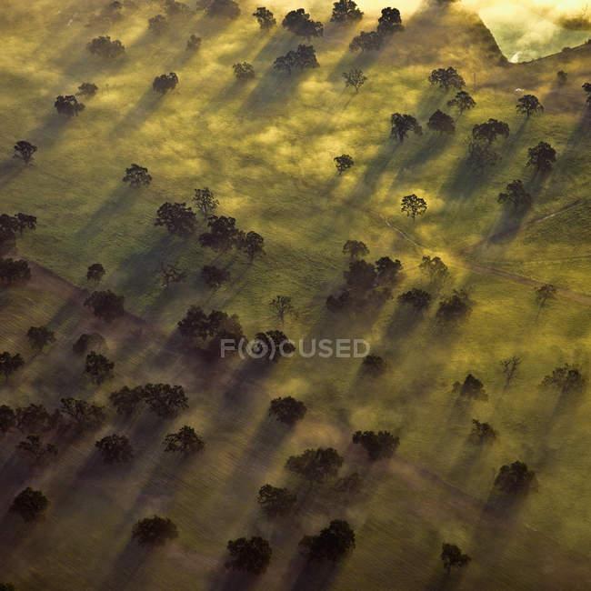 Vista aérea de árvores em névoa matinal na Califórnia, EUA — Fotografia de Stock