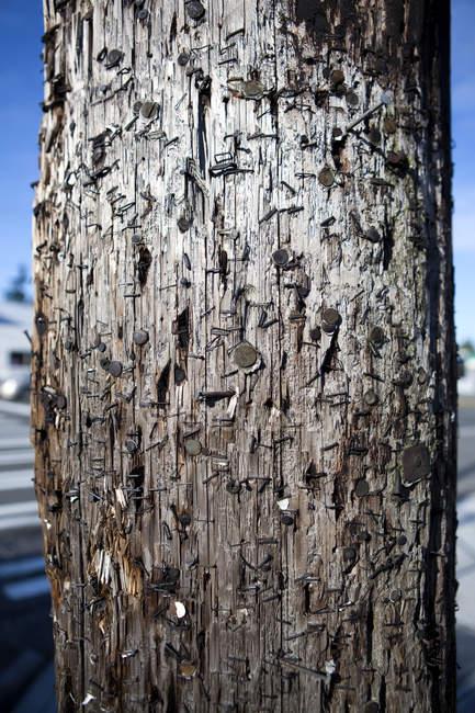 Крупний план телефонного полюса, покритих скобами і цвяхами в Сіетлі, штат Вашингтон, США — стокове фото
