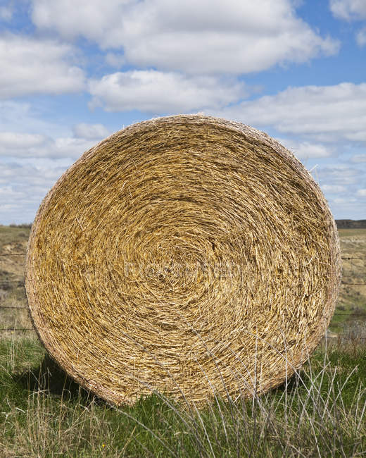 Bale of hay in rural countryside field — Stock Photo