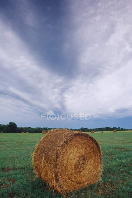 Hay bale in green field in McKinney, Texas, USA — Stock Photo