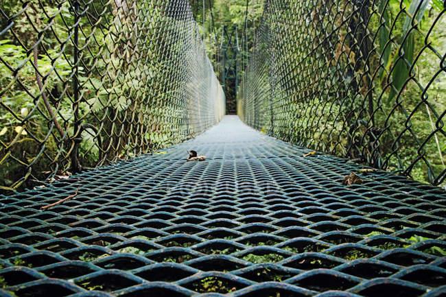 Пешеходный мост в пышных зеленых тропических лесах Коста-Рики — стоковое фото