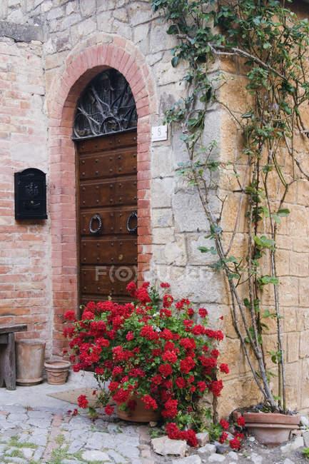 Plantes en pot devant une porte voûtée en Toscane, Italie, Europe — Photo de stock