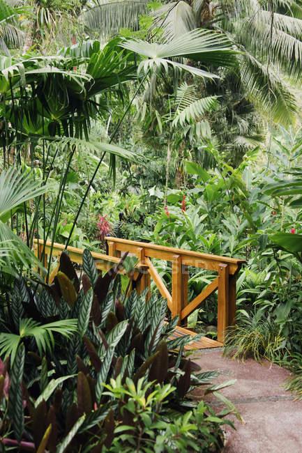 Chemin et pont en bois dans la forêt verte — Photo de stock