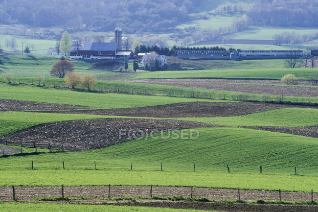 Fermes amish et terres agricoles avec cultures vertes, Belleville, Pennsylvanie, USA — Photo de stock