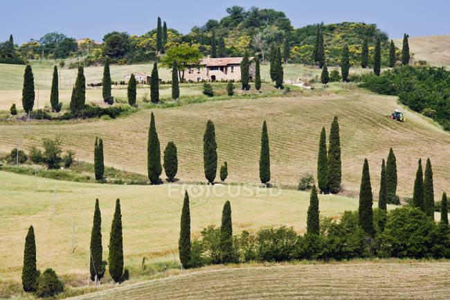 Arbres de cyprès sur la route sinueuse de colline en Italie, Europe — Photo de stock