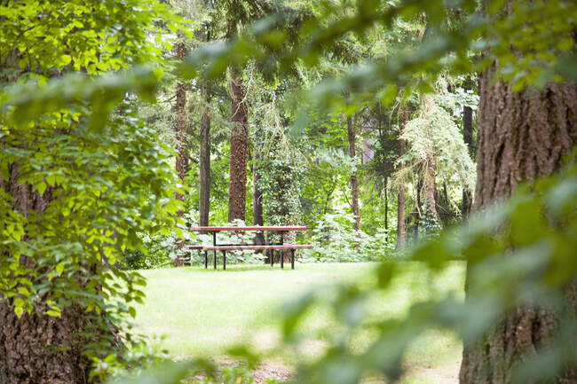 Picnic Table in Woods, selective focus — Stock Photo