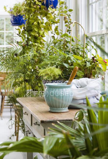 Interior de Greenhouse con macetas y plantas verdes. - foto de stock