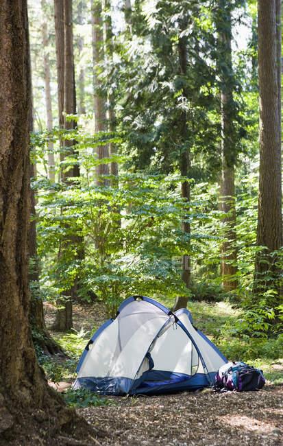 Палатка в красивом зеленом лесу, концепция кемпинга — стоковое фото