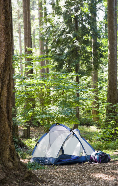 Zelt im schönen grünen Wald, Campingkonzept — Stockfoto