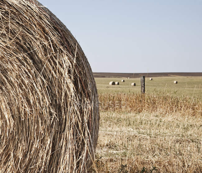 Close-up of circular hay bale in rural field — Stock Photo