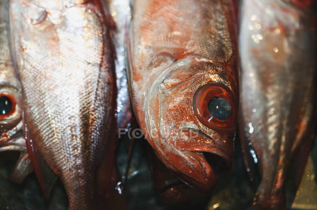 Raw fish heads and tails, close-up — Stock Photo