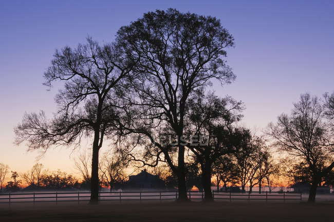 Trees and fence in evening mist, Louisiana, USA — Stock Photo