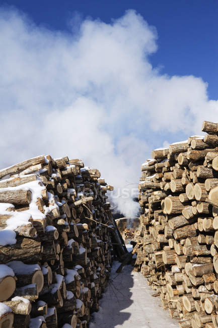 Stacks of woods covered with snow against white clouds of smoke in blue sky, Hokkaido, Japan — Stock Photo