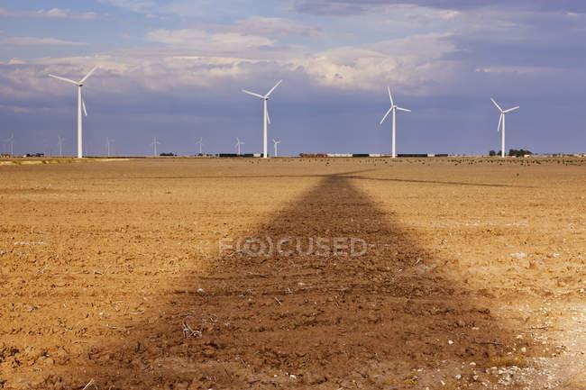 Wind turbines in seasonal field, Roscoe, Texas, USA — Stock Photo