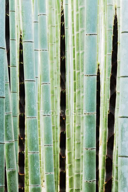 Détail des tiges de bambou dans la forêt à Kyoto, Japon — Photo de stock