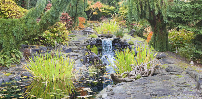 Autumn leaves on bushes around waterfall feature in landscaped garden - foto de stock