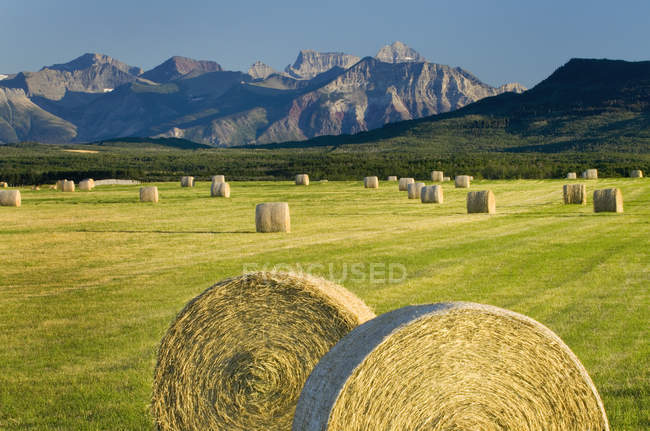 Hay bales in farm field in rural landscape with mountains — Stock Photo