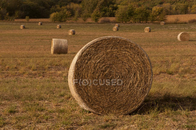 Hay bales in crop field in rural landscape — Stock Photo