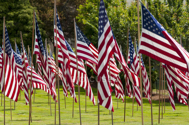 American flags in grass lawn — Stock Photo