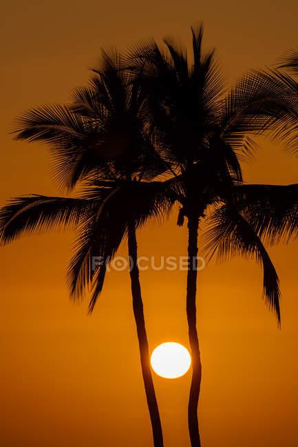 Soleil entre les silhouettes de palmiers, Hawaï, États-Unis — Photo de stock