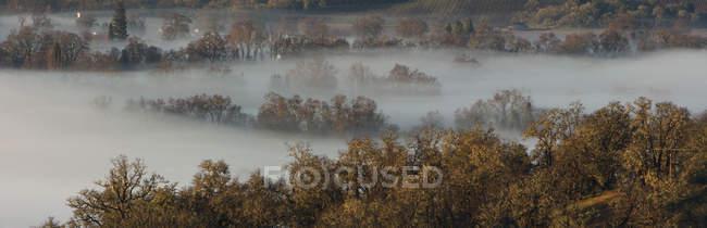 Névoa que rola sobre a paisagem rural com as árvores no vale — Fotografia de Stock