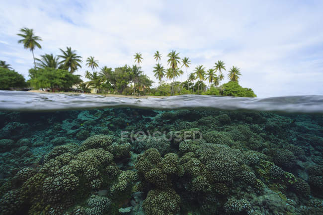 Arrecife en aguas tropicales, Bora Bora, Polinesia Francesa - foto de stock