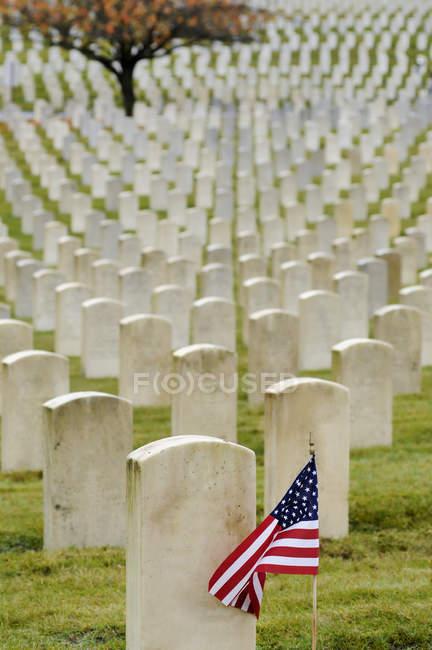 Bandiera americana piantata nel cimitero veterano, Seattle, Washington, Stati Uniti — Foto stock