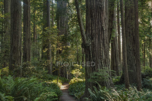Trees growing in state park forest, California, United States — Photo de stock