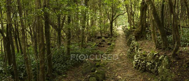 Camino de la suciedad a través del bosque remoto con plantas verdes - foto de stock