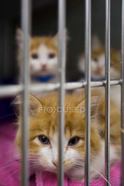 Cats sitting in cage at animal shelter — Stock Photo
