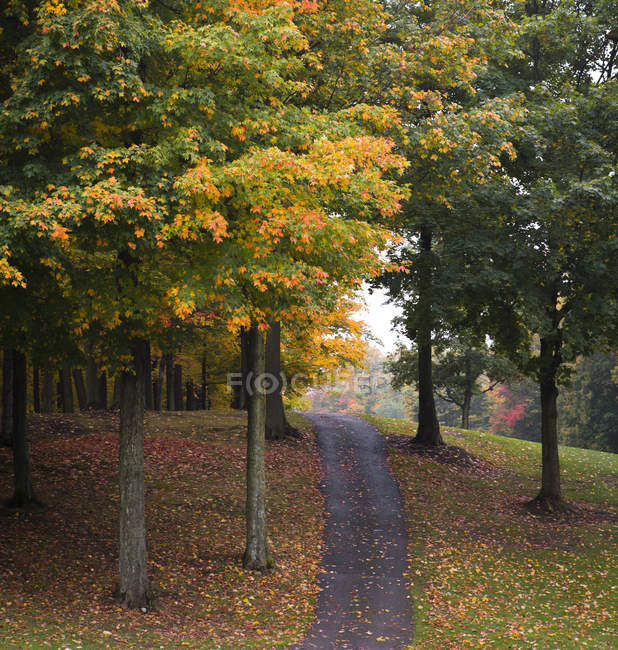 Path among trees and autumn leaves - foto de stock