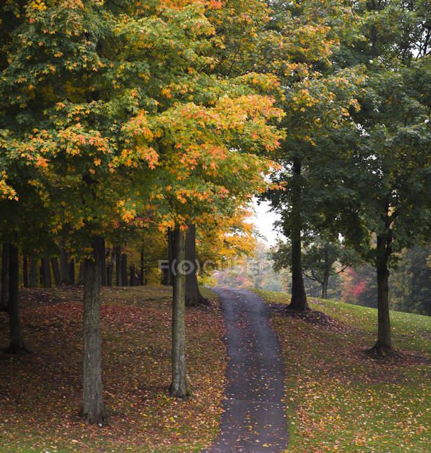 Weg zwischen Bäumen und Herbstlaub — Stockfoto