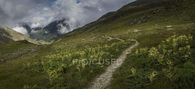 Mountain path in green meadow, Mt Blanc, Switzerland — Fotografia de Stock