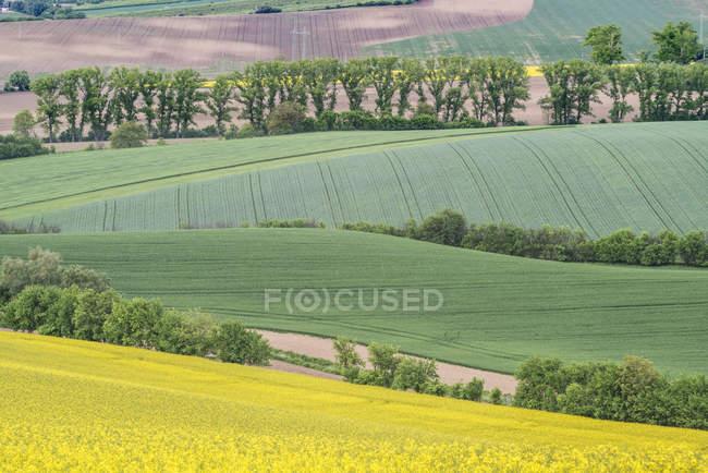 Vista cénico da paisagem rural de rolamento com campo do canola da exploração agrícola na República Checa — Fotografia de Stock